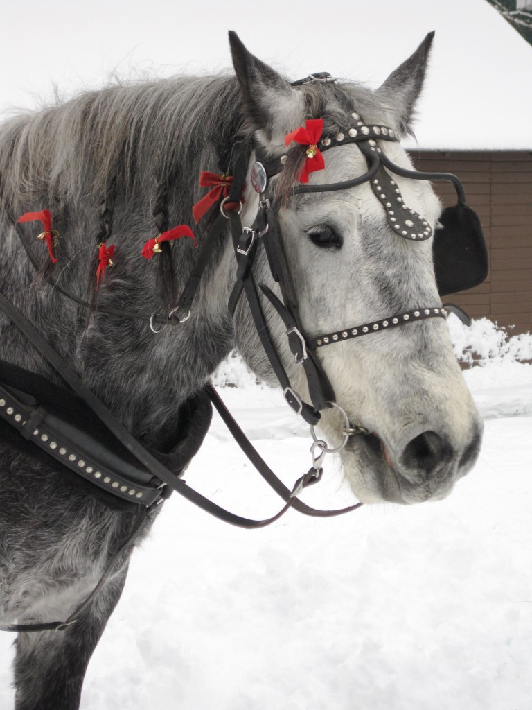 One-horse_open_sleigh2